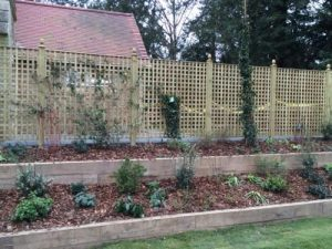 Close space square Trellis and raised borders with Oak sleepers
