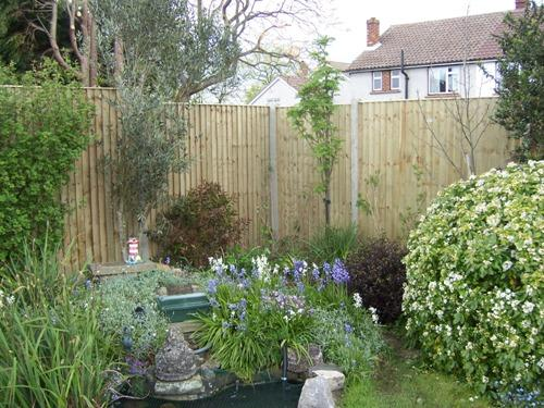 Crestala closeboard panels with concrete slotted posts.